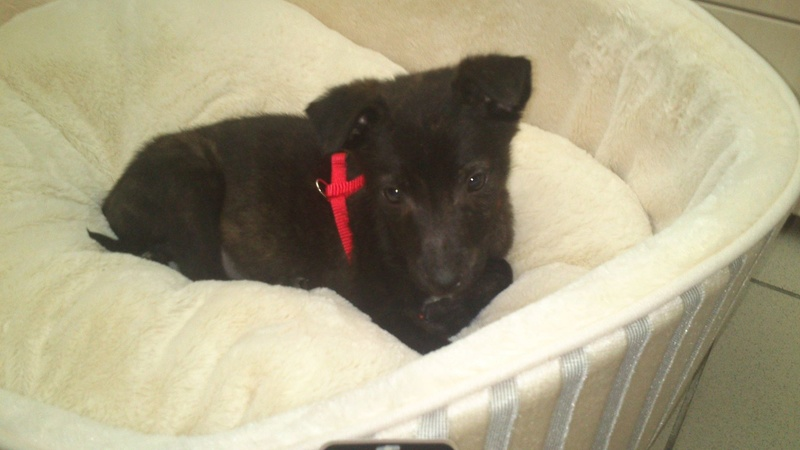 Cooky (ex-Newton) - mâle - Târgu Frumos - réservé adoption (67) 31699010