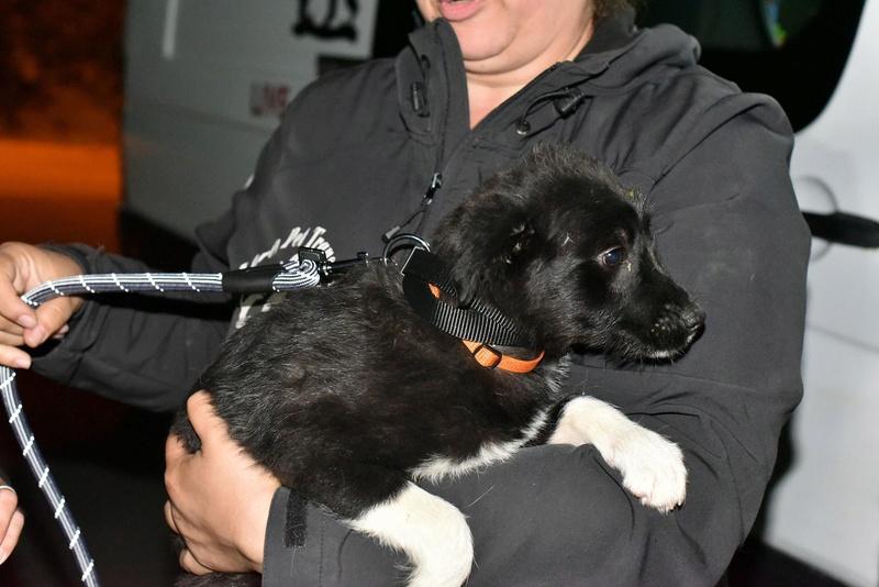 Ness (ex-Nestle) - femelle - chez Andreea (Târgu Frumos) adopter (68) 31898510