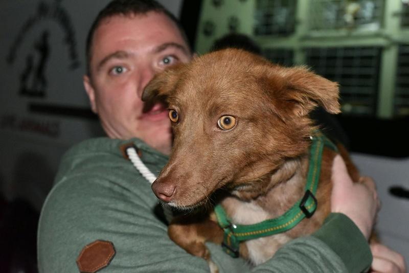 Lucky - mâle - Iasi - Réservé adoption (68)  31900410
