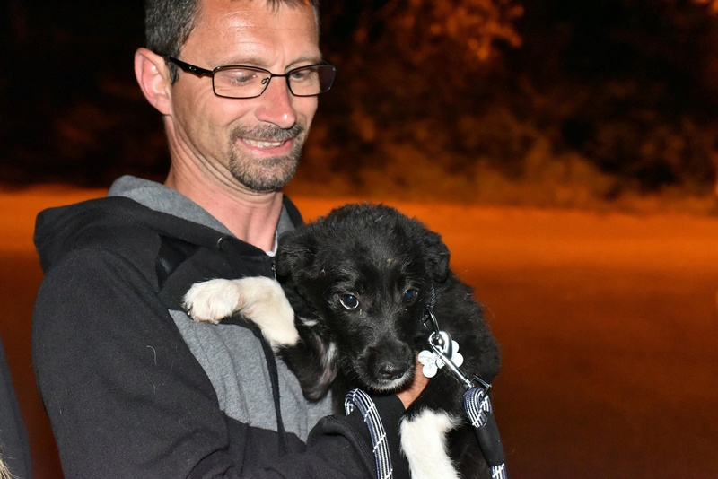 Ness (ex-Nestle) - femelle - chez Andreea (Târgu Frumos) adopter (68) 31901911