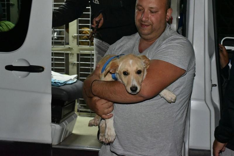 Aramis - mâle - chez Andreea (Târgu Frumos) - réservé adoption (68) 31909710
