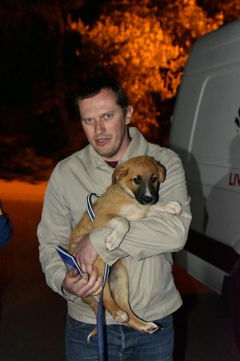 Athos - mâle - chez Andreea - Târgu Frumos - réservé adoption (68) 31913710
