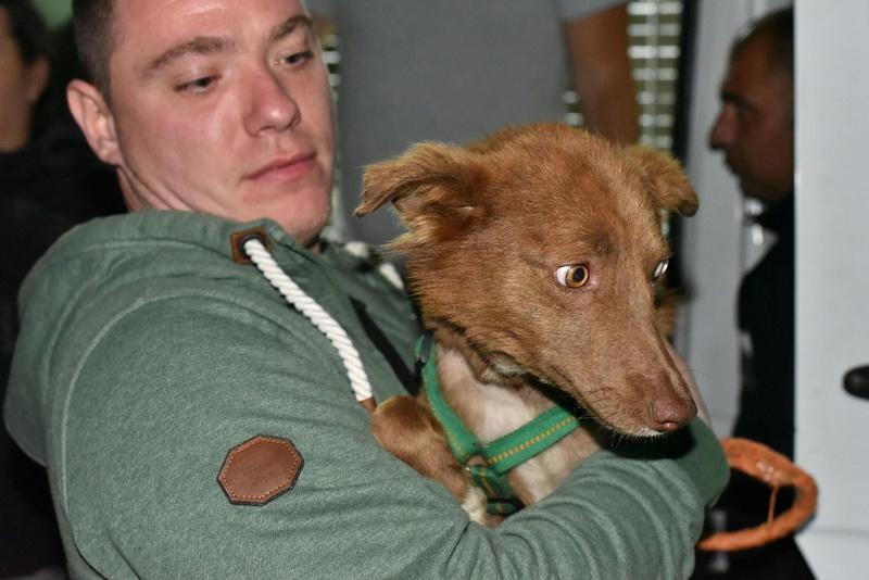 Lucky - mâle - Iasi - Réservé adoption (68)  31945610