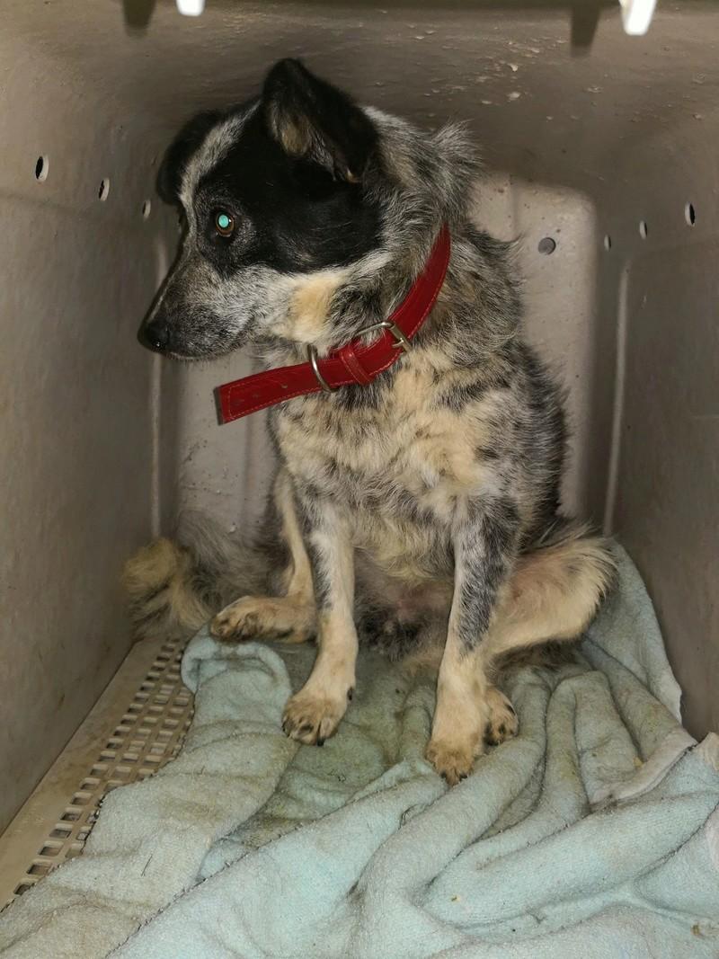 Tootsie - femelle - refuge de Târgu Frumos - adoptée 31947112