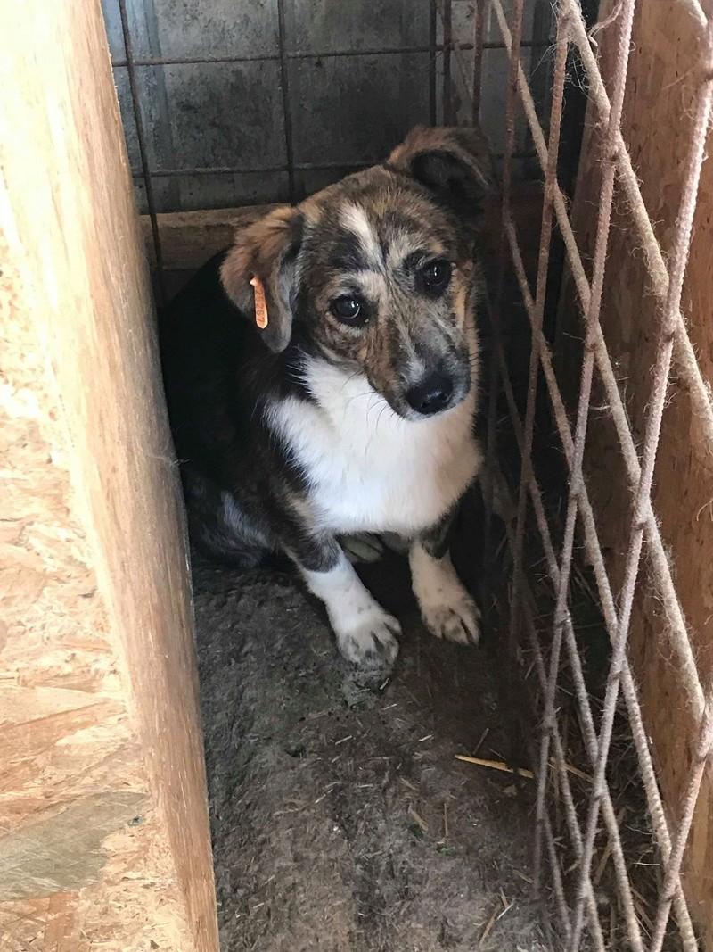 Nutela - chienne femelle - refuge de Târgu Frumos - en famille d'accueil dans le 68 31957810