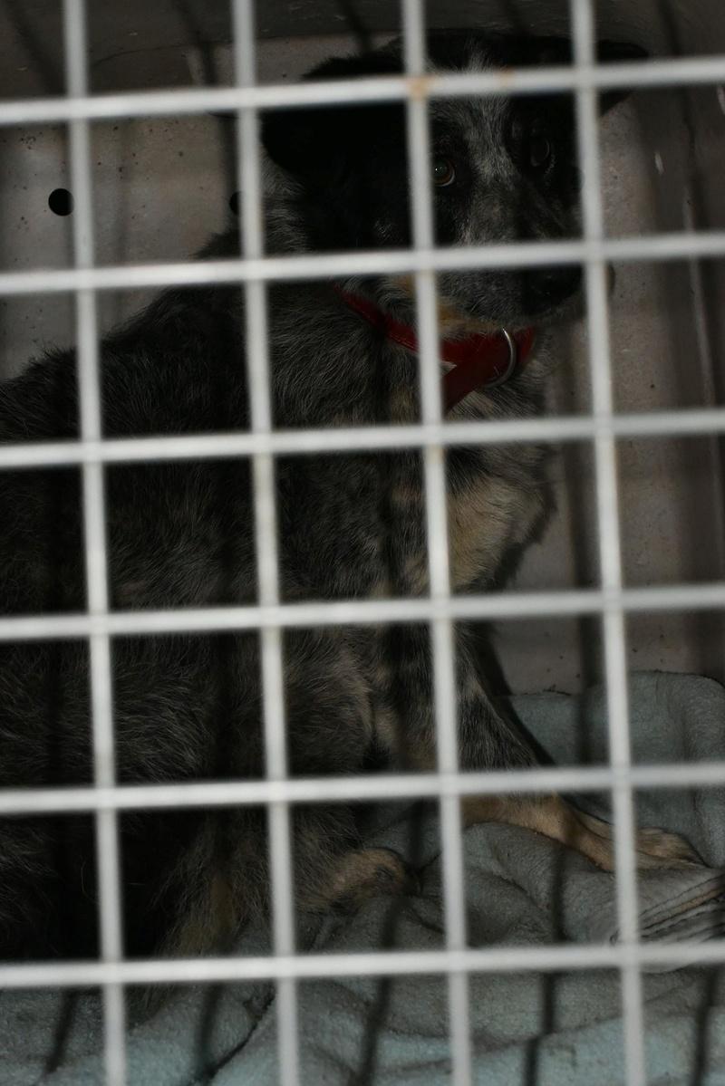 Tootsie - femelle - refuge de Târgu Frumos - adoptée 31959610