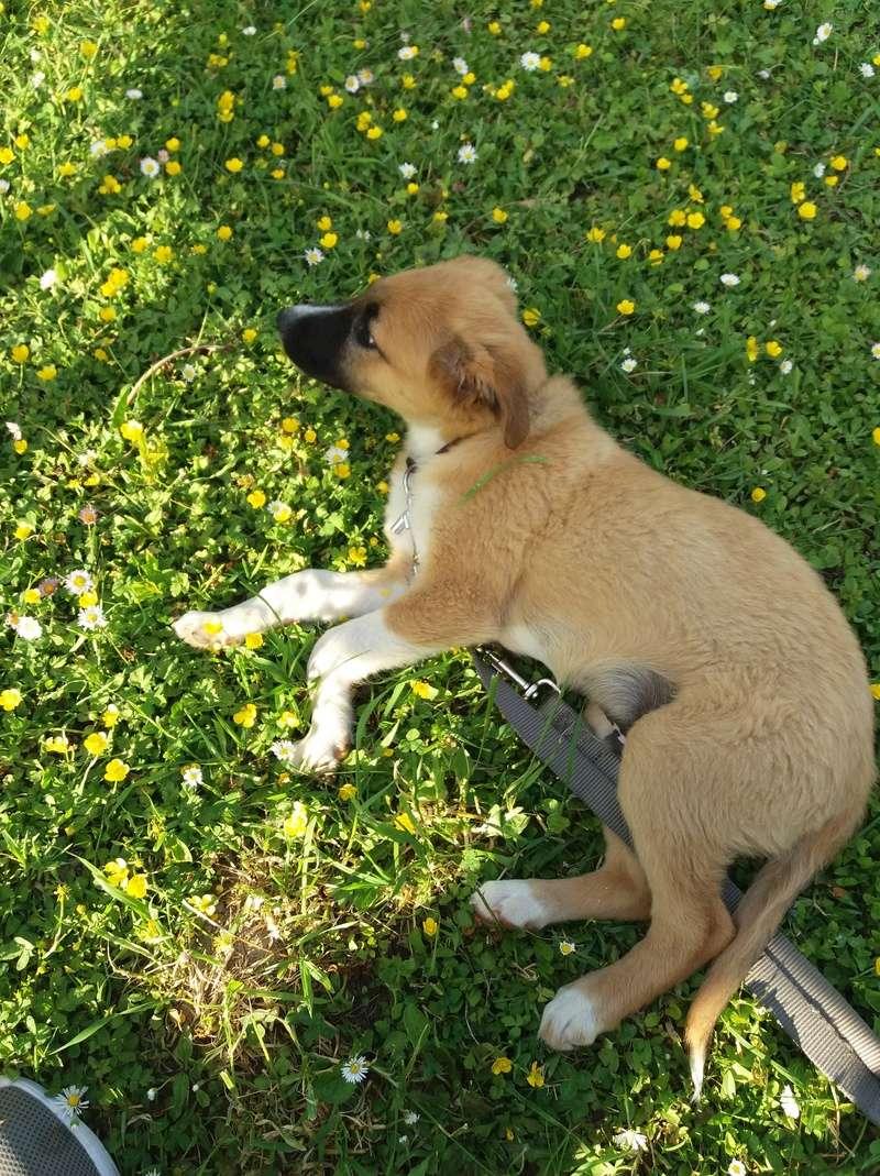 Athos - mâle - chez Andreea - Târgu Frumos - réservé adoption (68) 31960410