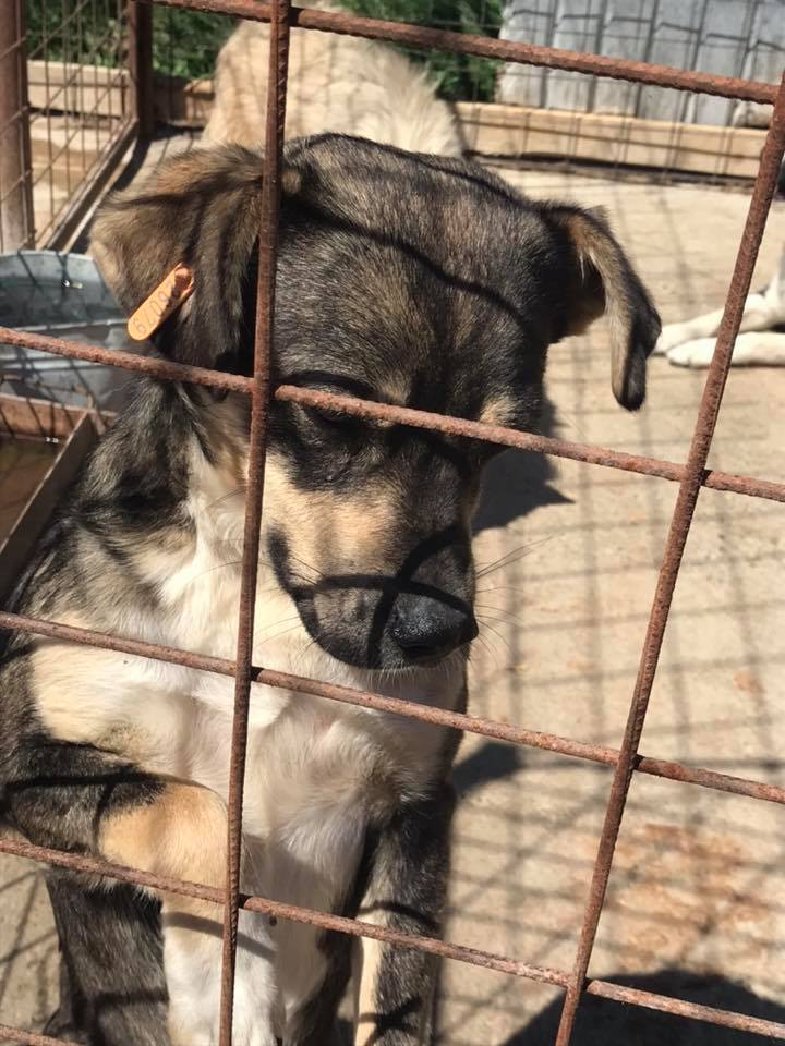 Gimli (ex-Jonny) - mâle - refuge de Târgu Frumos - réservé adoption (68) 32083812