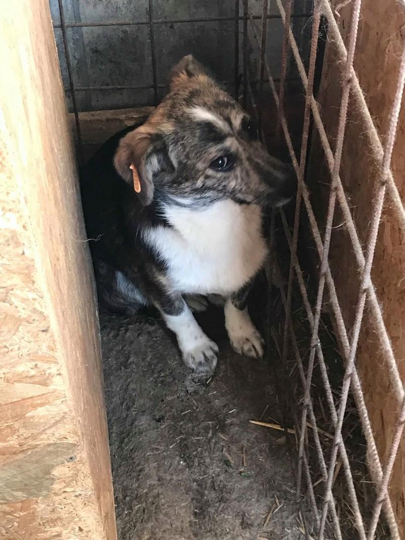 Nutela - chienne femelle - refuge de Târgu Frumos - en famille d'accueil dans le 68 32085010