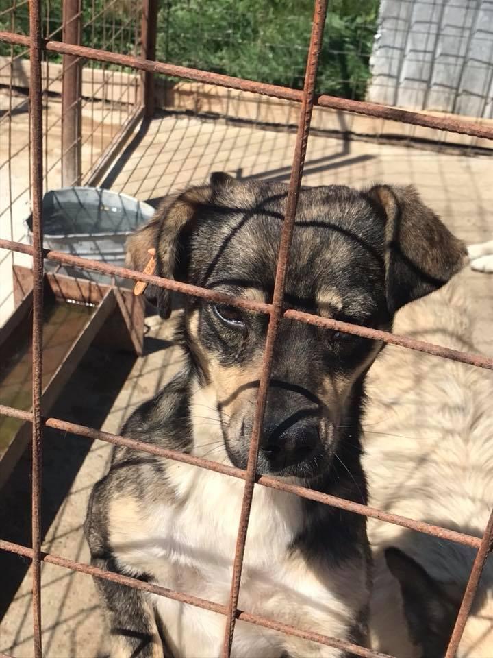 Gimli (ex-Jonny) - mâle - refuge de Târgu Frumos - réservé adoption (68) 32105411