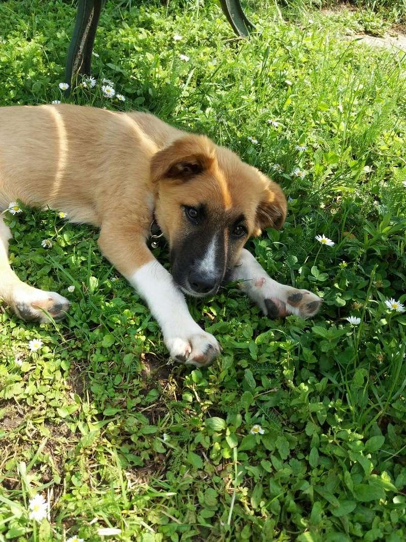 Athos - mâle - chez Andreea - Târgu Frumos - réservé adoption (68) 32864610