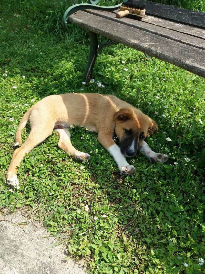 Athos - mâle - chez Andreea - Târgu Frumos - réservé adoption (68) 32940910