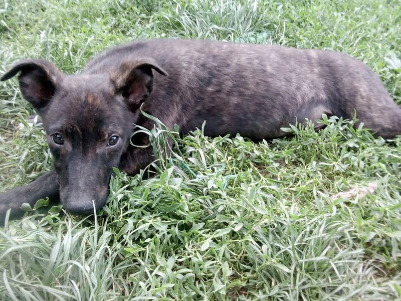 Cooky (ex-Newton) - mâle - Târgu Frumos - réservé adoption (67) 32959710