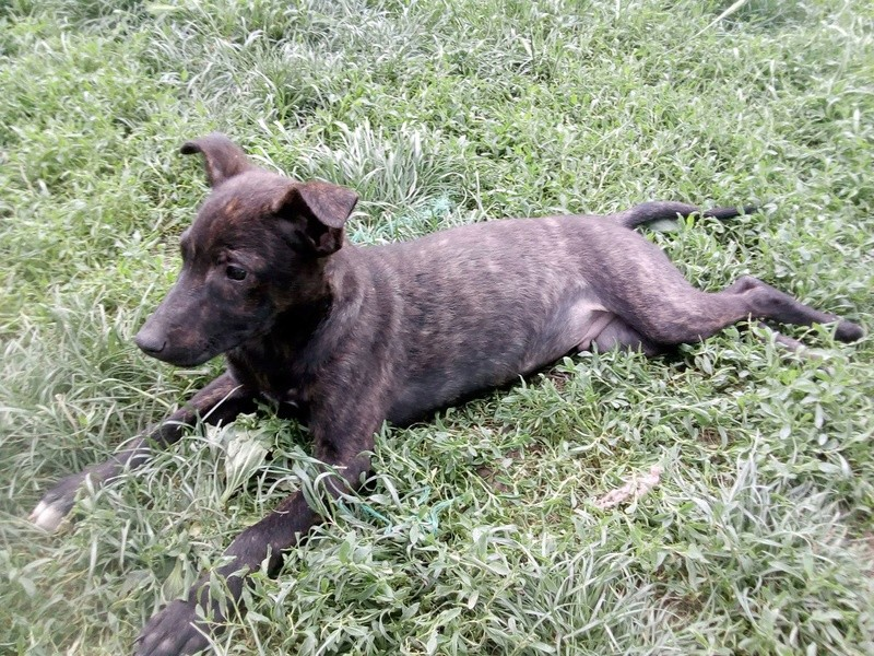 Cooky (ex-Newton) - mâle - Târgu Frumos - réservé adoption (67) 32978810