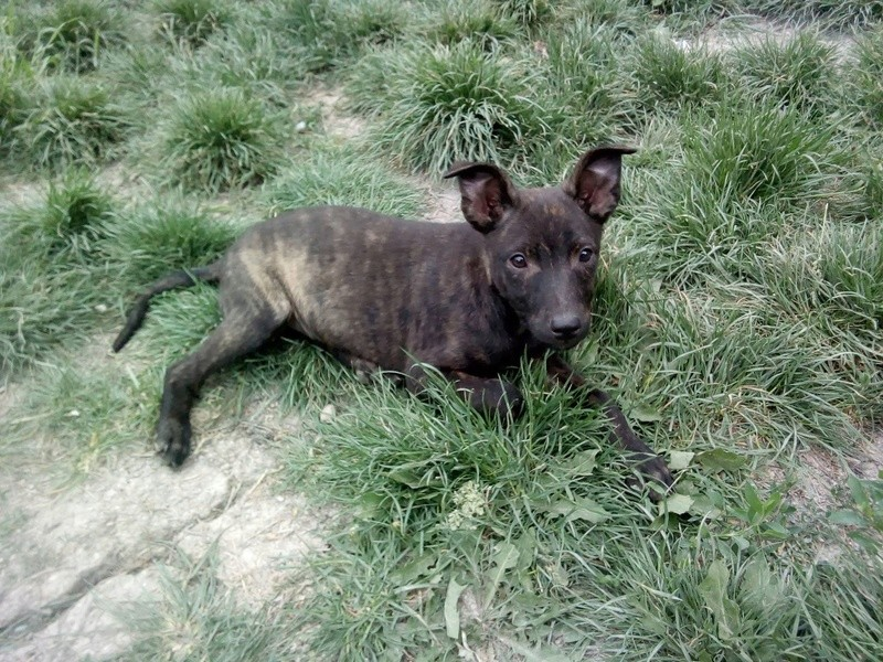 Cooky (ex-Newton) - mâle - Târgu Frumos - réservé adoption (67) 33022311