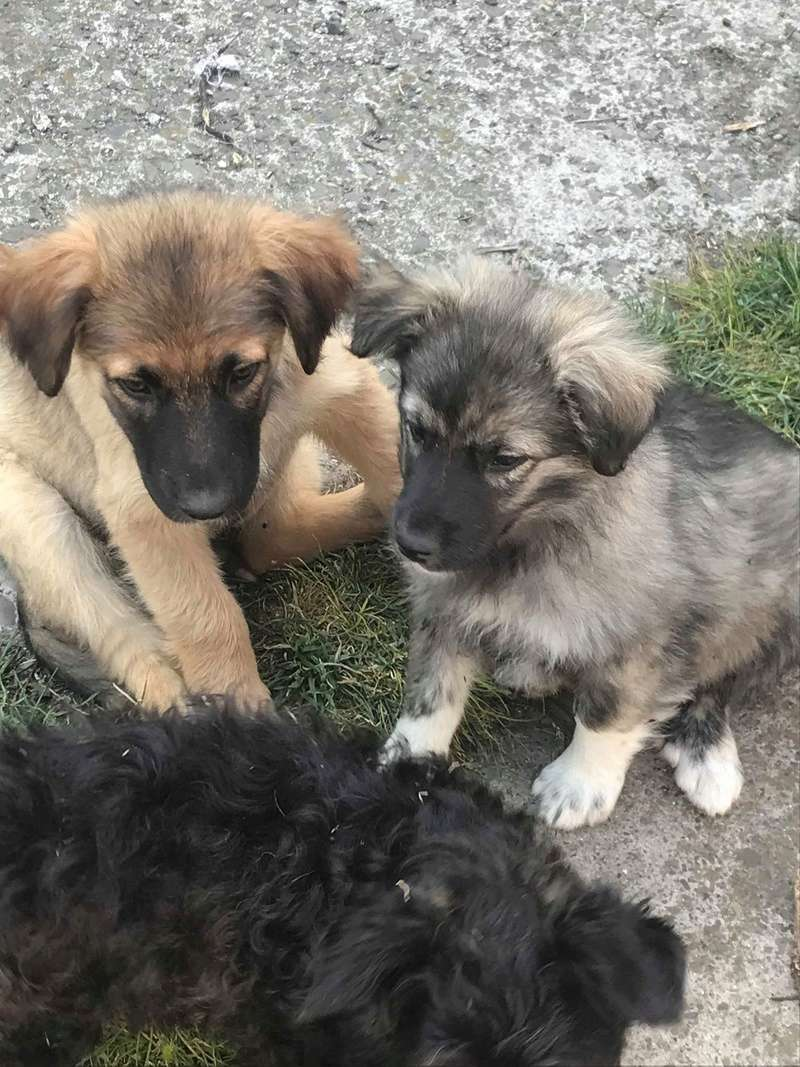 Ace (ex-Milano) - mâle - chez Andreea (Târgu Frumos) - réservée adoption (67) 33109011