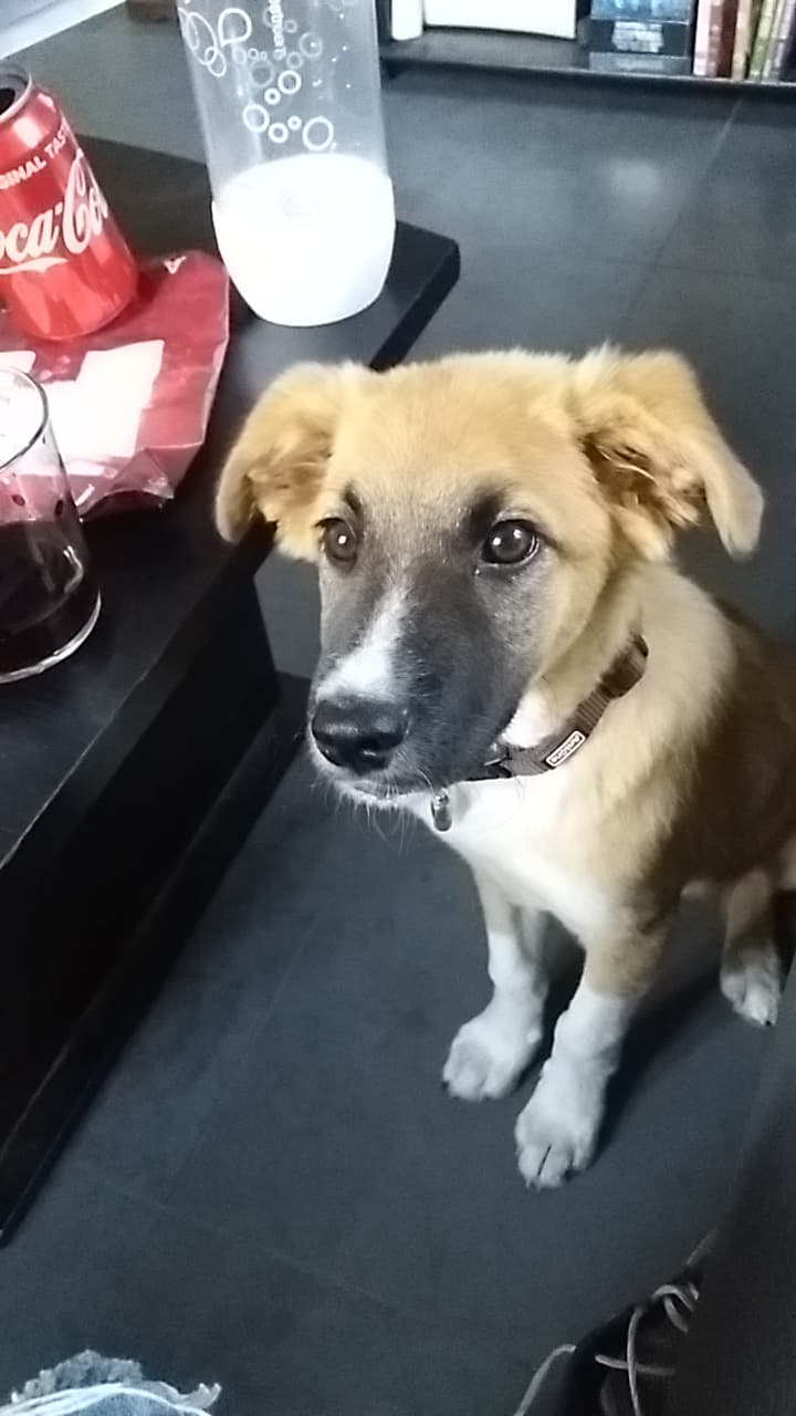 Athos - mâle - chez Andreea - Târgu Frumos - réservé adoption (68) 33745010