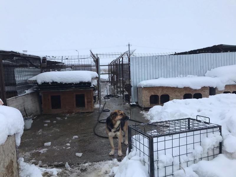 La fourrière communale de Târgu Frumos 46498110