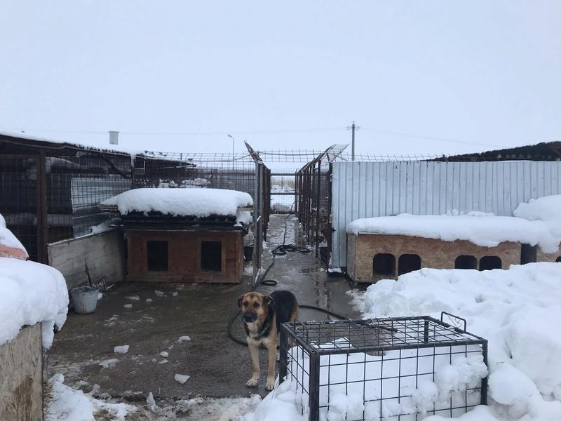 La fourrière communale de Târgu Frumos 46525410
