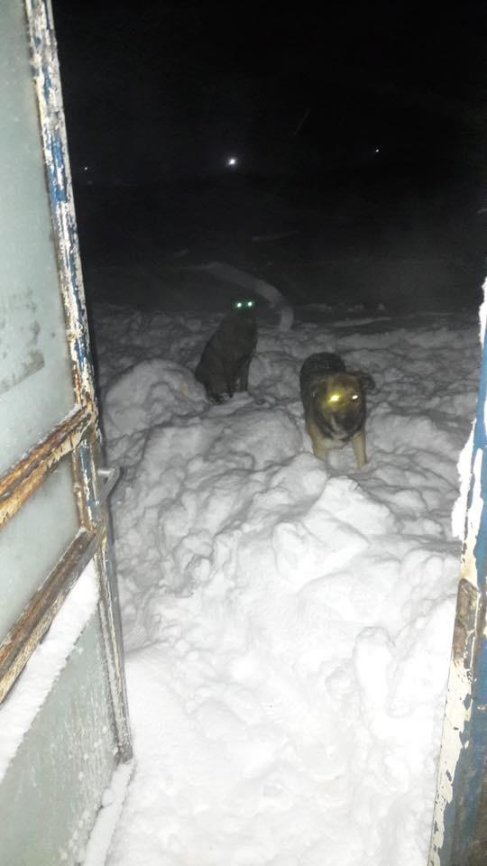 La fourrière communale de Târgu Frumos 730a9f10