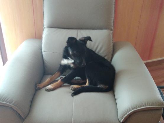 Nookie - femelle  - refuge de Târgu Frumos - Réservée adoption (67) 80525c10