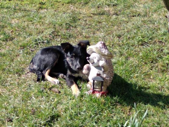 Nookie - femelle  - refuge de Târgu Frumos - Réservée adoption (67) 82409b10