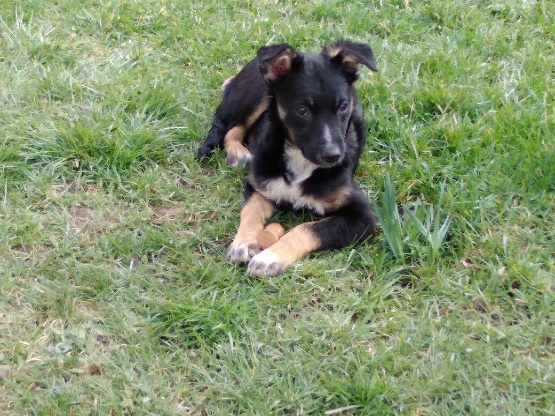 Nookie - femelle  - refuge de Târgu Frumos - Réservée adoption (67) 9b8f3210