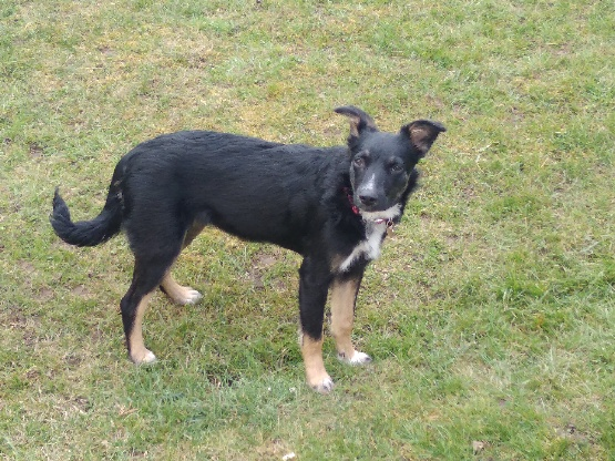 Nookie - femelle  - refuge de Târgu Frumos - Réservée adoption (67) 9bbcdd10