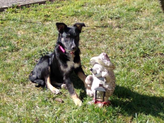 Nookie - femelle  - refuge de Târgu Frumos - Réservée adoption (67) D0279010