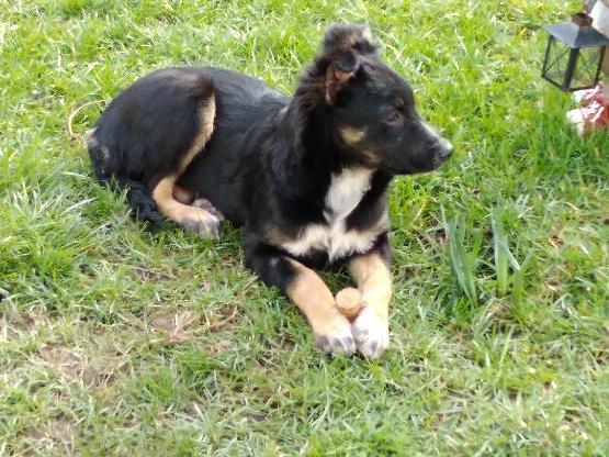 Nookie - femelle  - refuge de Târgu Frumos - Réservée adoption (67) Efe3ff10