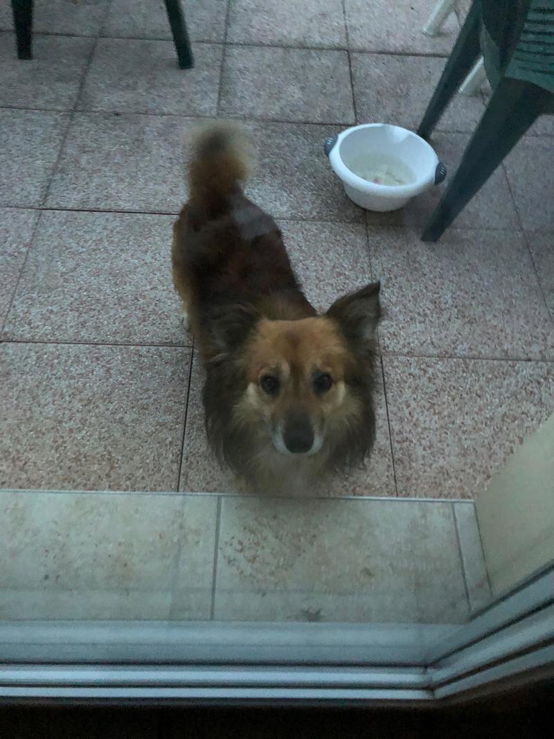 Simba (ex-Leutu) - mâle à Târgu Frumos - réservé adoption Unname16