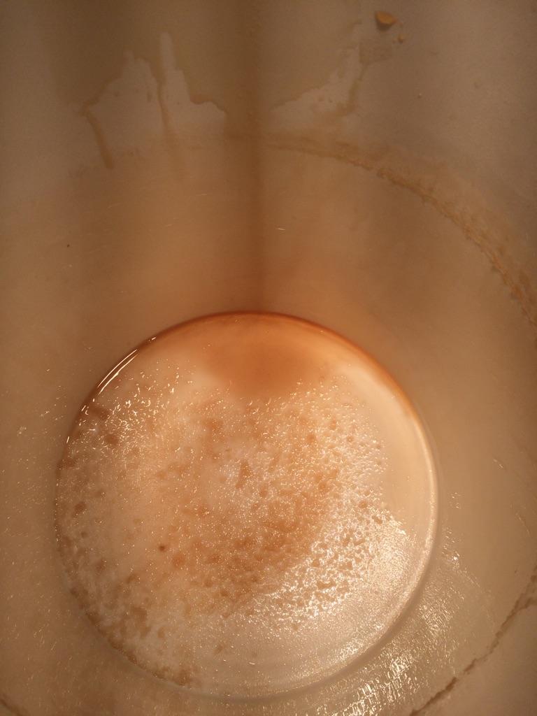 Filtration avec terre diatomée (Mingo) Img_1513