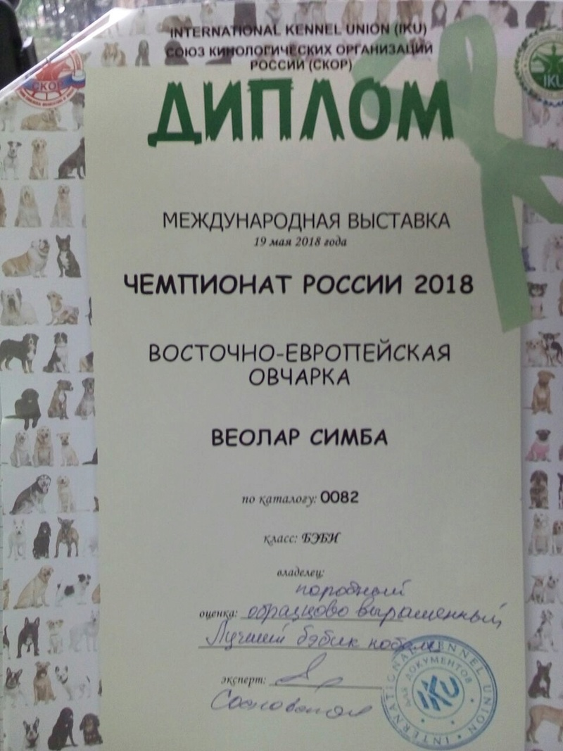 19-05-2018  2х-CACIB Чемпионат России и Континент Союз-2018 Img-2318