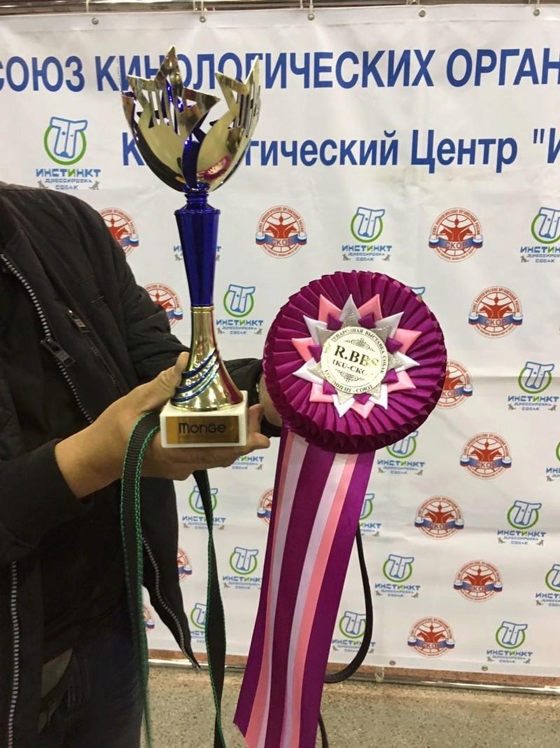 19-05-2018  2х-CACIB Чемпионат России и Континент Союз-2018 Img-2326