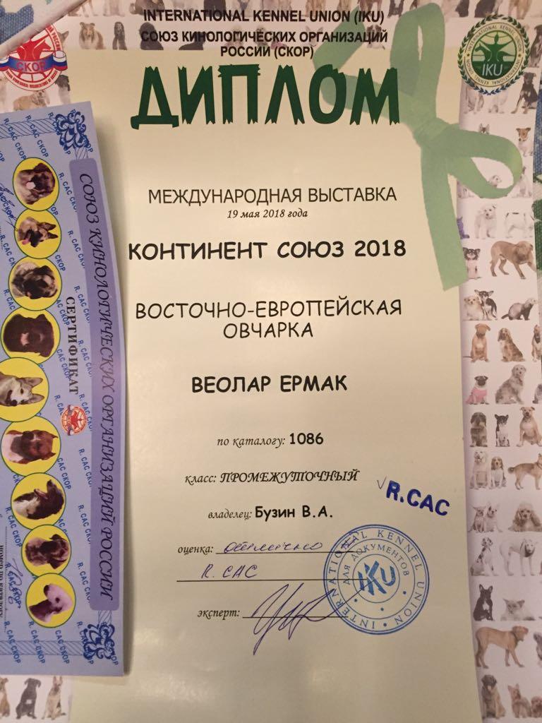 19-05-2018  2х-CACIB Чемпионат России и Континент Союз-2018 Img-2328