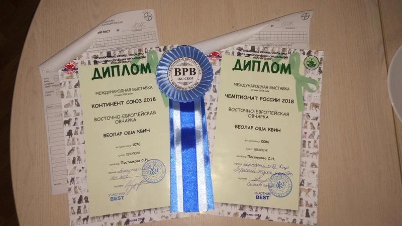 ВОСТОЧНО-ЕВРОПЕЙСКАЯ ОВЧАРКА ВЕОЛАР ОША КВИН Img-2335