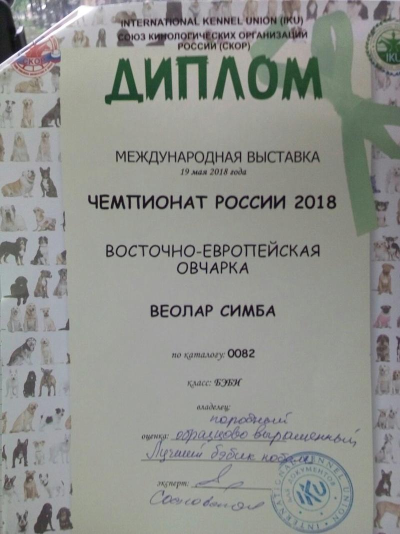 ВОСТОЧНО-ЕВРОПЕЙСКАЯ ОВЧАРКА ВЕОЛАР СИМБА Img-2341