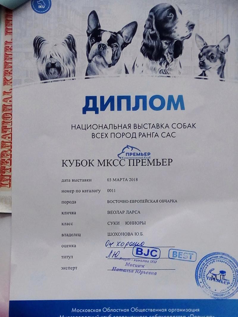 ВОСТОЧНО-ЕВРОПЕЙСКАЯ ОВЧАРКА ВЕОЛАР ЛАРСА - Страница 4 Img_2072