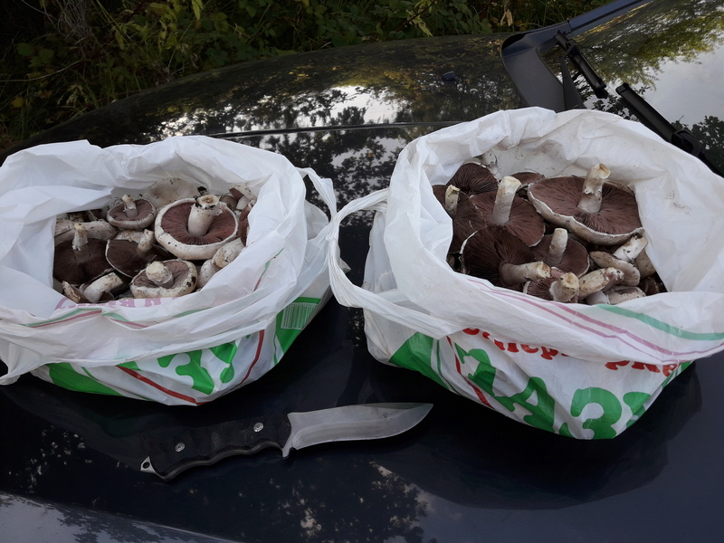 В момента има много печурки  20171011