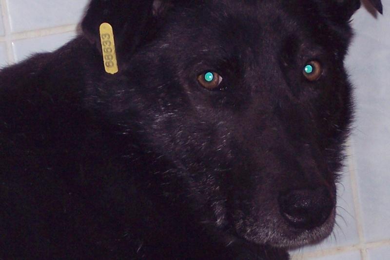 CASPER - Mâle croisé de taille moyenne, né environ octobre 2009 (PASCANI) - adopté par Marie-Blanche (57) - Page 10 100_4916