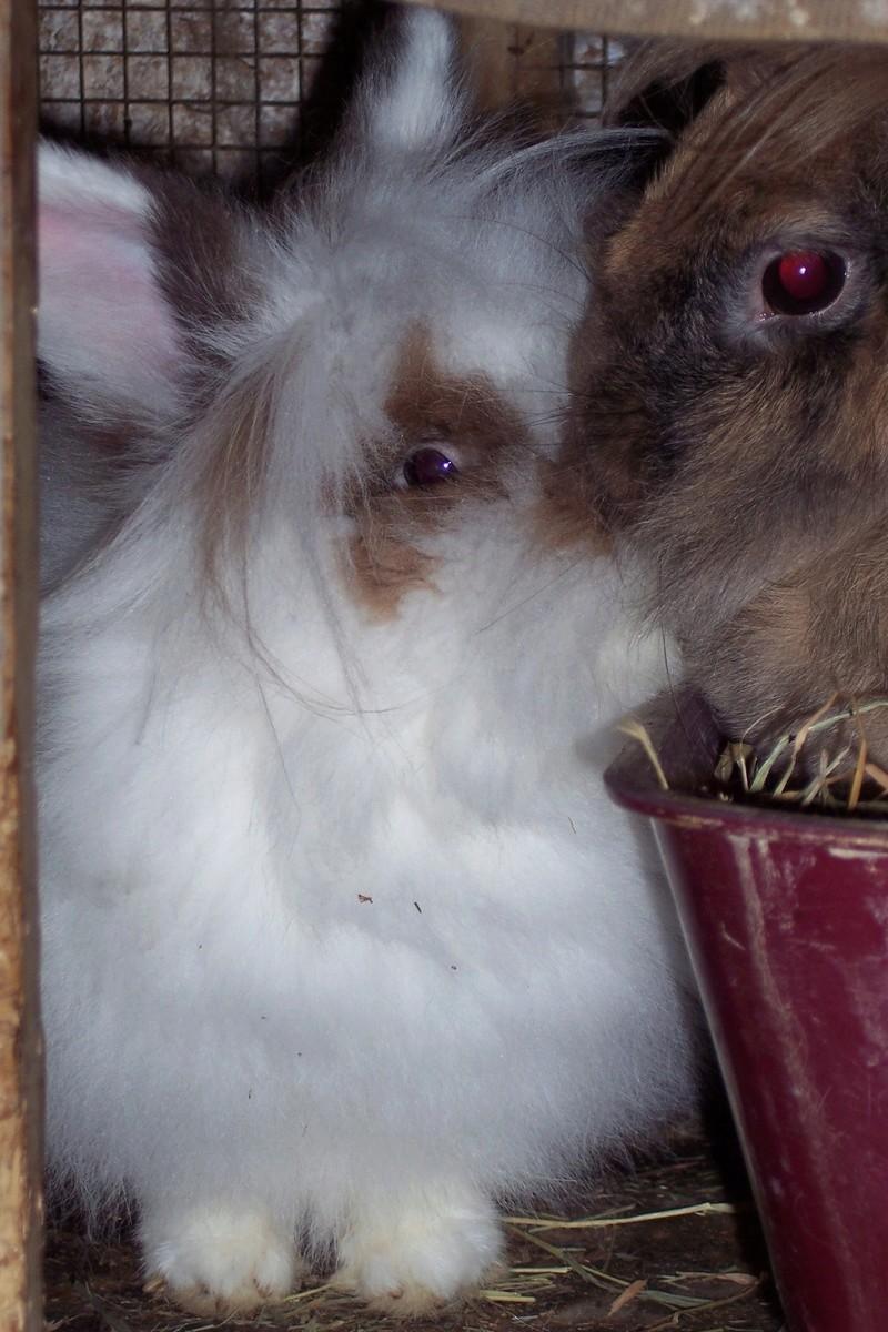 MONSIEUR - mâle,  de taille moyenne, croisé BA, né en 2006 (PASCANI) - En FALD chez Laurence (91) - Page 19 Bambi_11