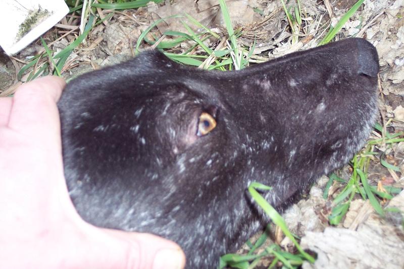CASPER - Mâle croisé de taille moyenne, né environ octobre 2009 (PASCANI) - adopté par Marie-Blanche (57) - Page 10 Caspe163