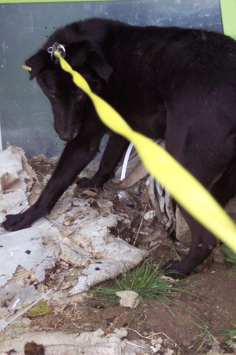 CASPER - Mâle croisé de taille moyenne, né environ octobre 2009 (PASCANI) - adopté par Marie-Blanche (57) - Page 10 Caspe182