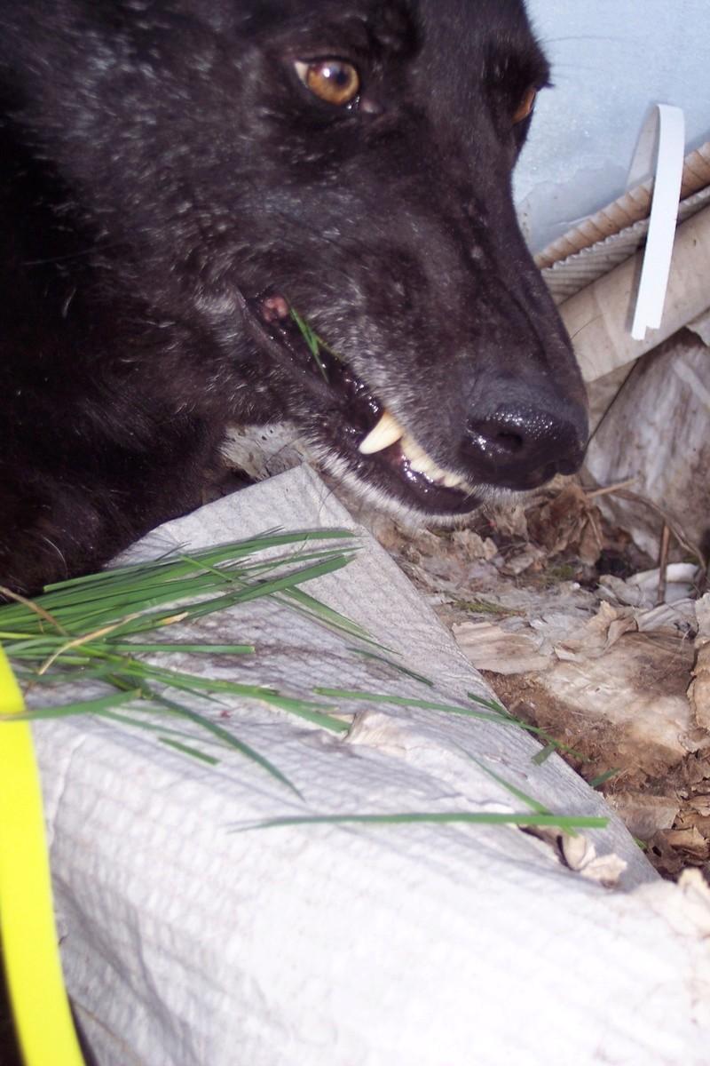 CASPER - Mâle croisé de taille moyenne, né environ octobre 2009 (PASCANI) - adopté par Marie-Blanche (57) - Page 10 Caspe184