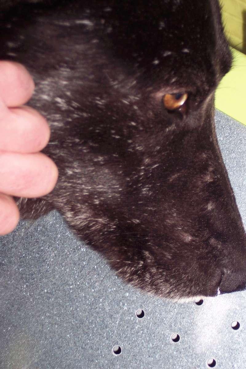 CASPER - Mâle croisé de taille moyenne, né environ octobre 2009 (PASCANI) - adopté par Marie-Blanche (57) - Page 10 Caspe188