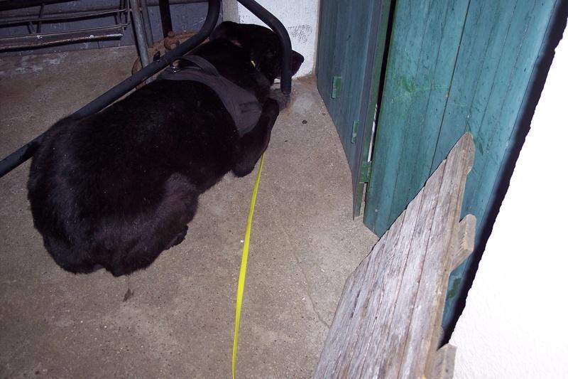 CASPER - Mâle croisé de taille moyenne, né environ octobre 2009 (PASCANI) - adopté par Marie-Blanche (57) - Page 10 Caspe197