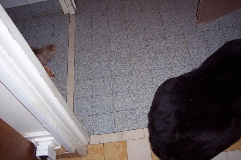 CASPER - Mâle croisé de taille moyenne, né environ octobre 2009 (PASCANI) - adopté par Marie-Blanche (57) - Page 10 Caspe203