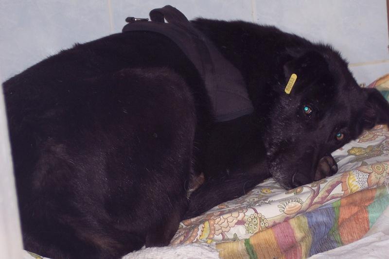 CASPER - Mâle croisé de taille moyenne, né environ octobre 2009 (PASCANI) - adopté par Marie-Blanche (57) - Page 10 Caspe208