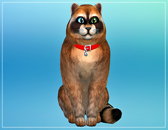 TS4 - Catcoon  Racoon11