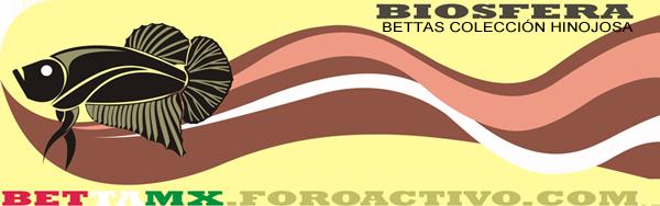 Educate Betta splendens? Firma_15